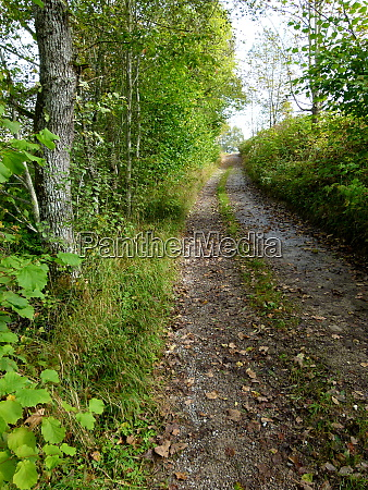 beautiful hiking path with autumn leaves