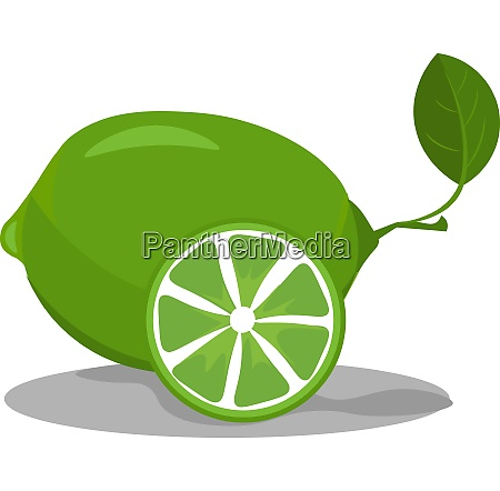 lime in green color vector or