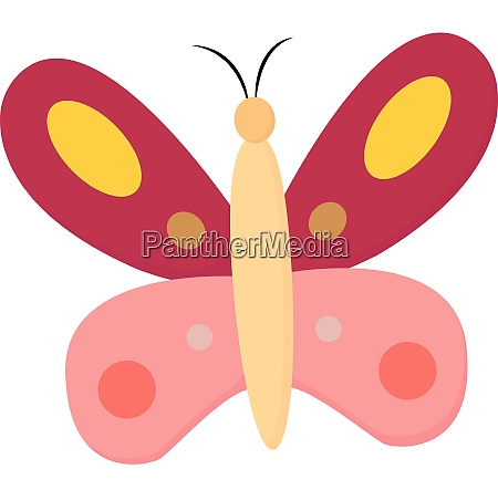 pink butterfly vector or color illustration