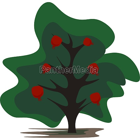 cartoon pomegranate tree vector or color