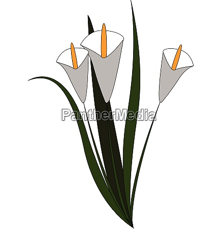 white flowers hand drawn design illustration