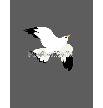 portrait, of, the, bird, , seagull, at - 27509808