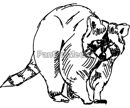 racoon drawing illustration vector on white