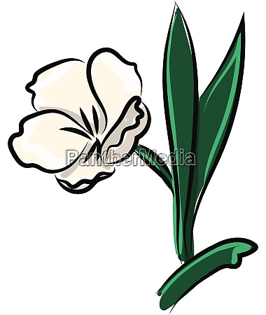 white flower illustration vector on white
