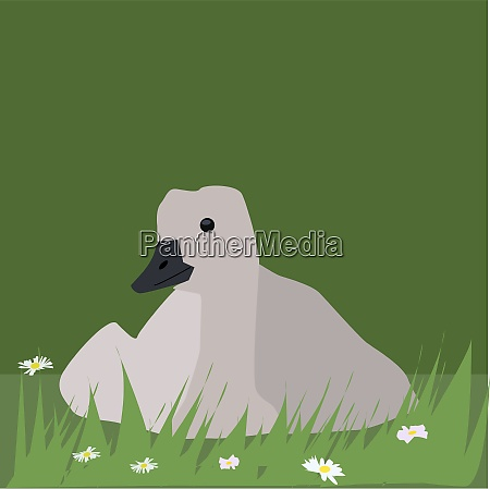 goose in grass illustration vector on