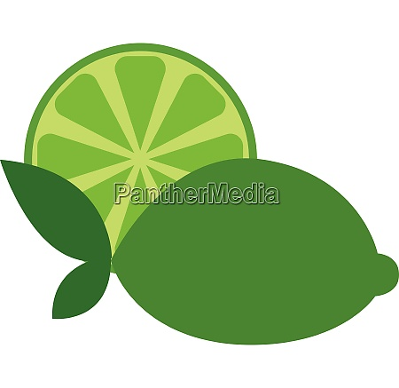 lime with leaves vector or color
