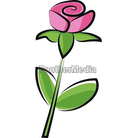 rose vector or color illustration