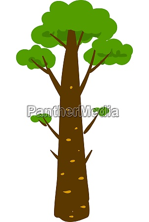 long green pine illustration vector on