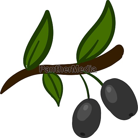 two silver olives illustration vector on