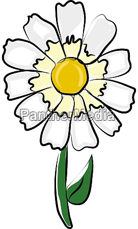 simple daisy flower illustration vector on