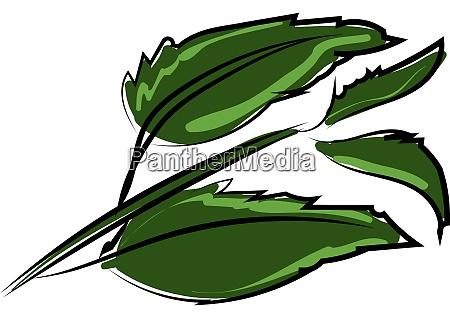 leaves illustration vector on white background