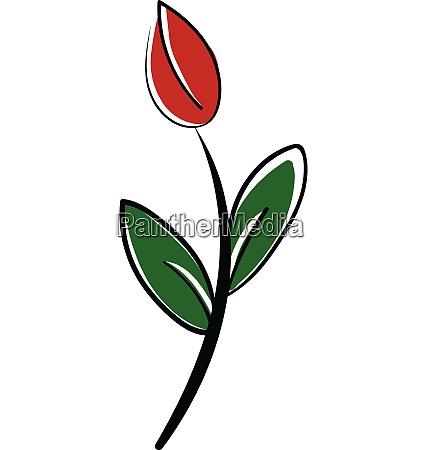 poppy sketch vector or color illustration