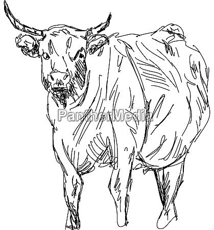 buffalo drawing illustration vector on white