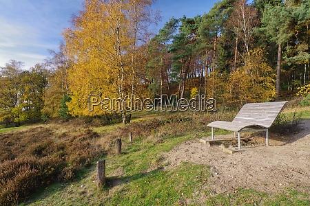 autumn in nature reservat senne oerlinghausen