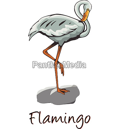 flamingo color illustration