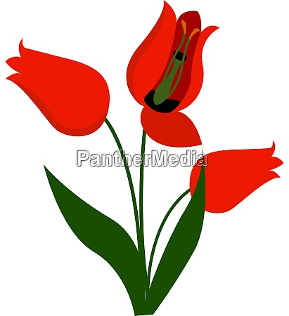 red flower illustration vector on white