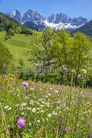 summery mountain meadows in the rear