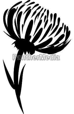 dahlia sketch illustration vector on white