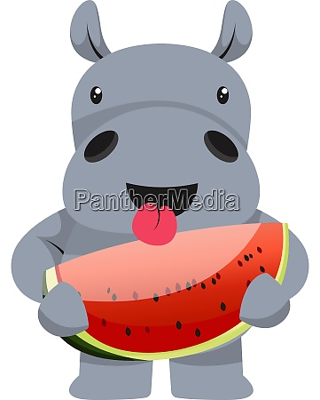 hippo with watermelon illustration vector on