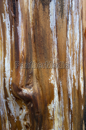 close up of a treek trunk