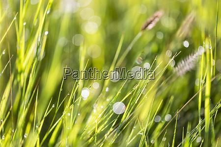 wet blades of grass in sunlight