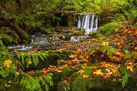 vibrant autumn colours in a forest