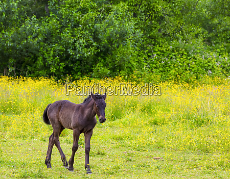 brown horse in a pasture saskatchewan