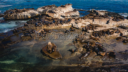 aerial view of seals on isolated