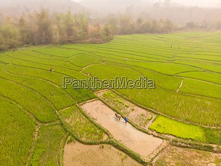 aerial view of luang prabang paddy