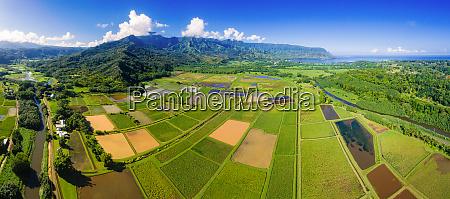 panoramic aerial view of taro fields