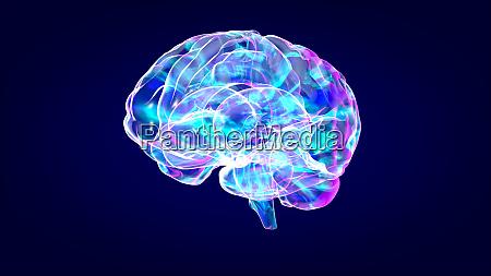 brain xray human anatomy 3d illustrated
