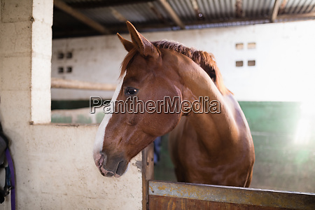 brown horse in stable