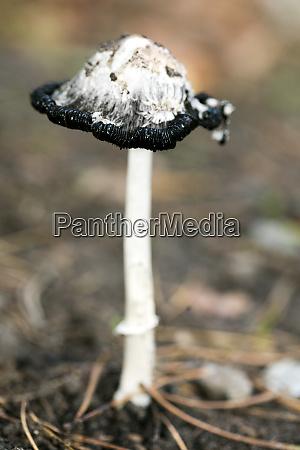 wild mushrooms on nature october macro