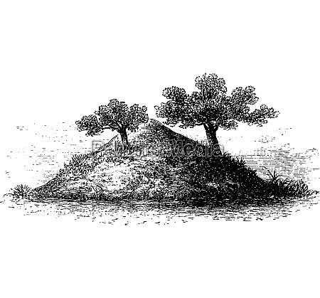termite mound in southern africa vintage