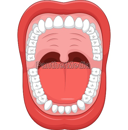 parts of human mouth open mouth