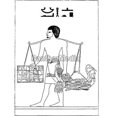 a bird breeder in egypt vintage
