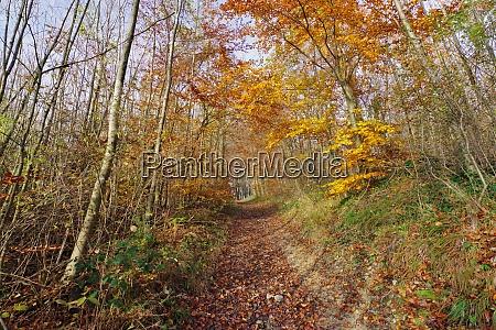 autumn in laemershagen bielefeld eastwestphalia lippe