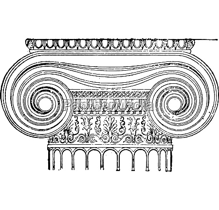 ionic capital vintage engraving
