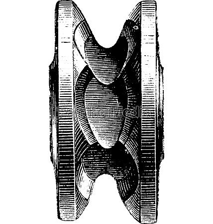 nuts vintage engraving