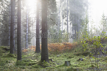 tranquil scene in forest