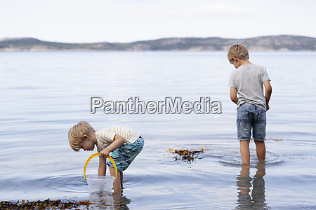 brothers picking up seashells on beach