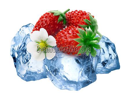 frozen alpine strawberry isolated paths