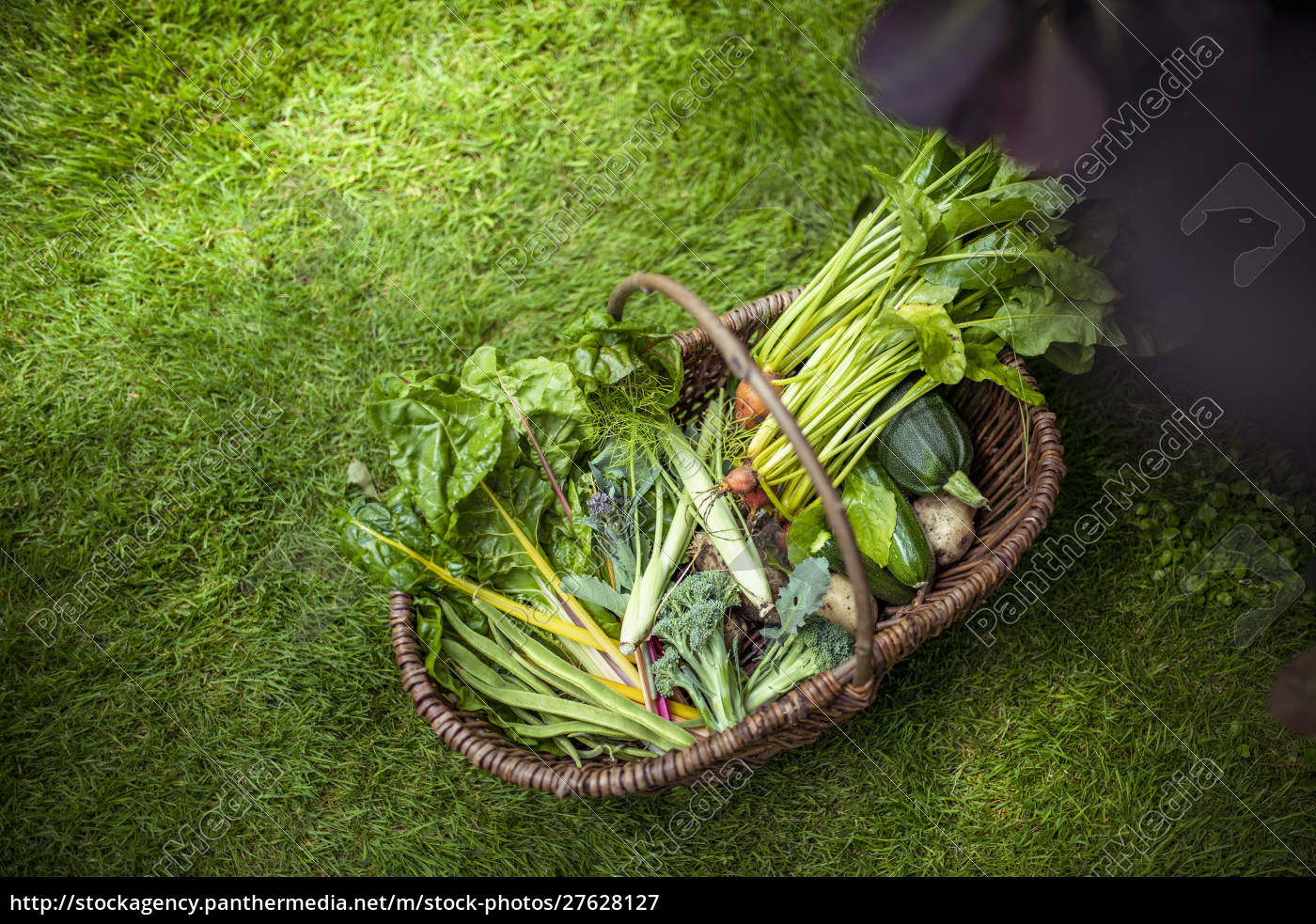 basket, of, courgettes, , broccoli, , swiss, chard, - 27628127