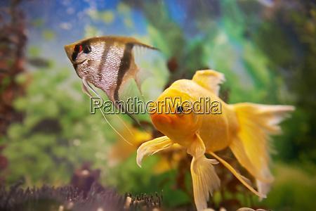 colorful fishes in aquarium