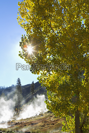 sun rays peek out through leaves