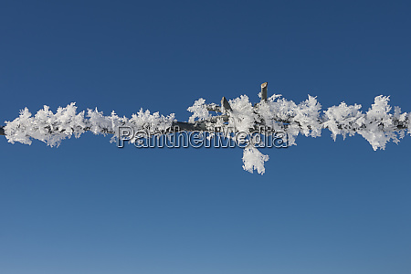 thick hoar frost on fence wire