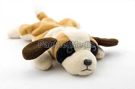 sad cuddle dog isolated on white