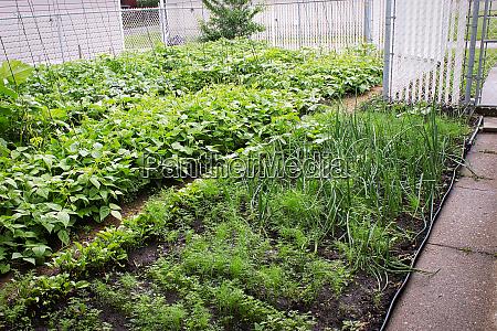 view of a vegetable garden rows