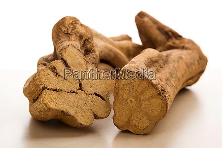 ayahuasca banisteriopsis caapi pieces