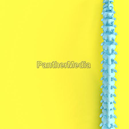 3d render image of a spine